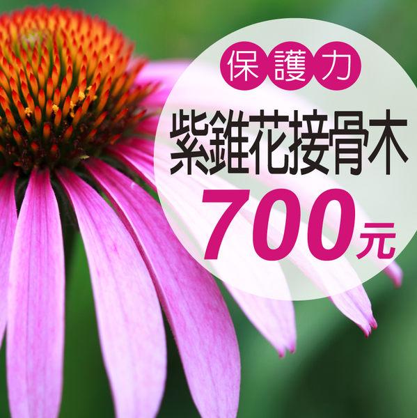 【大醫生技】紫錐花接骨木複方錠特價700元,可搭配初乳褐藻糖膠維持生理機能健康增強保護力