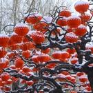 元旦新年小紅燈籠掛飾結婚裝飾商場開業場景布置連串折疊小紙燈籠 WD一米陽光