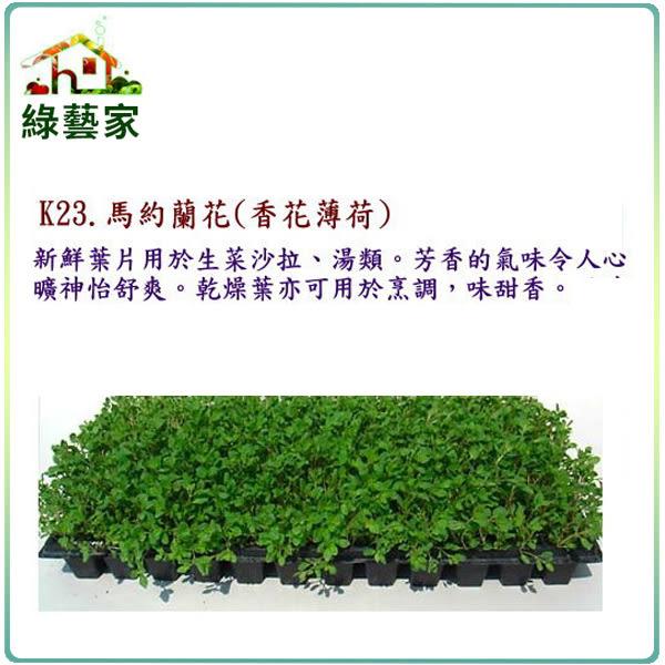 【綠藝家】大包裝K23.馬約蘭花種子(香花薄荷)2萬顆