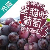 日本特選貓眼黑葡萄1串/盒(500g±5%/串)/盒【愛買冷藏】