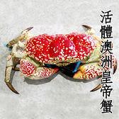 ㊣盅龐水產◇活體澳洲皇帝蟹◇ 蟹中之皇 歡迎團購 批發 餐廳