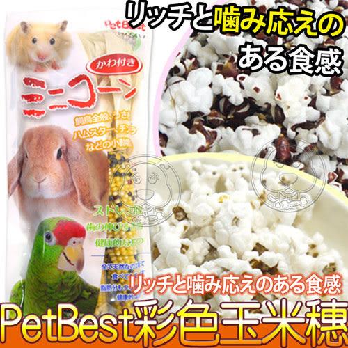 【zoo寵物商城】Pet Best》PM-S417寵物鼠彩色玉米穗3支入1包