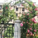 拱門爬藤架子戶外花架薔薇月季絲瓜拱形攀爬...