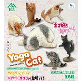 盒裝6款【正版授權】Animal Life 貓瑜珈大師 盒玩 盒抽系列 擺飾 研達 Toy Friend - 795624