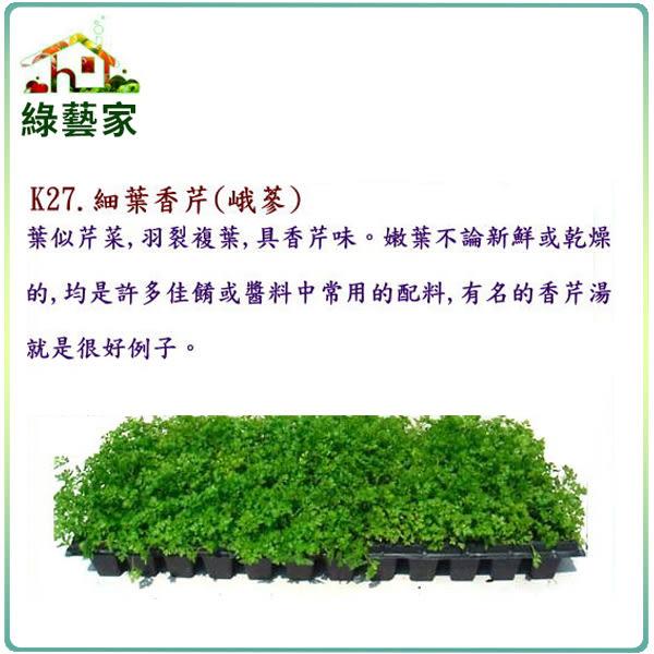 【綠藝家】大包裝K27.細葉香芹種子(峨蔘)45克