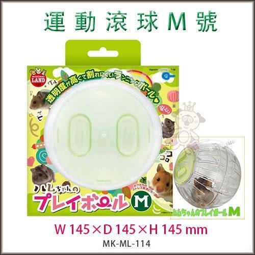 *KING WANG*日本Marukan 鼠鼠跑跑 運動球 透明滾球 M號 【ML-114】