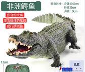 【雙11折300】惡搞兒童電動鱷魚玩具遙控仿真大號塑料模型