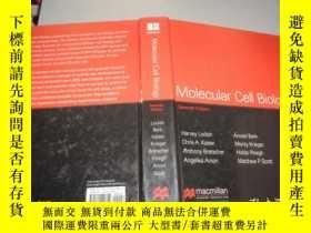 二手書博民逛書店Molecular罕見Cell Biology: International Edition 英文原版 精裝Y