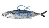 〖試吃促銷〗薄鹽漬挪威鯖魚(460g±10%/尾)#只要88元 #無真空-1D1A【魚大俠】PT017