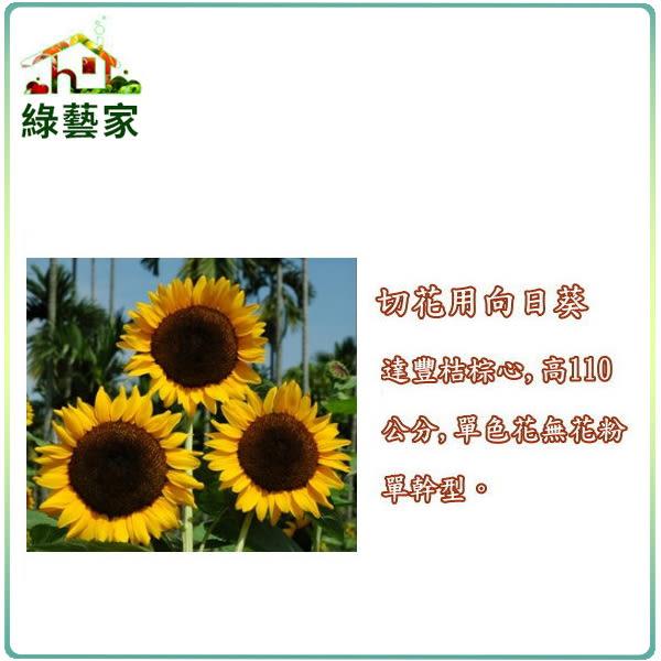 【綠藝家】H40.切花用向日葵種子5顆