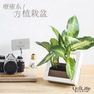 辦公室小物-療癒小植栽盆(方型),顏色隨機   (超值加購品)