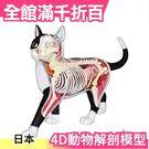【NO.29貓】日版 青島文化教材社 AOSHIMA 4D立體拼圖 解剖模型 動物解剖【小福部屋】