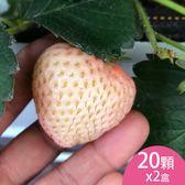 (2盒)天藍果園-大湖白草莓(20顆)含運組