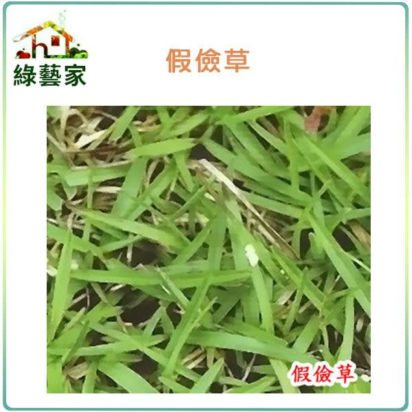 【綠藝家】超級假儉草種子20克(超級喬治亞.純度99%)