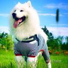 大狗狗衣服寵物夏季睡衣四腳衣中大型犬薩摩耶金毛薄款夏裝夏天「時尚彩虹屋」