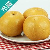 韓國圓黃梨/3粒(350g±10%/粒)【愛買冷藏】