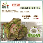【綠藝家】A56-1.紅奶油萵苣(佳麗)種子2克(約1700顆)