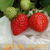 紓困振興 防鳥網番石榴桃子水果草莓無花果套袋防鳥防蟲芭樂楊桃專用袋 居樂坊