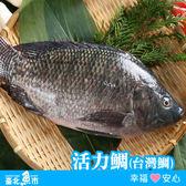【台北魚市】生產追溯♥活力鯛(台灣鯛) 400g±10%
