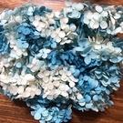 安娜新款雙色,藍白色,一份2克