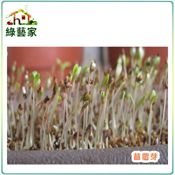 【綠藝家】J01.苜宿(芽菜種子)種子7000顆