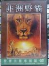 挖寶二手片-G10-032-正版DVD*電影【非洲野貓(迪士尼)】旁白 山繆傑克森
