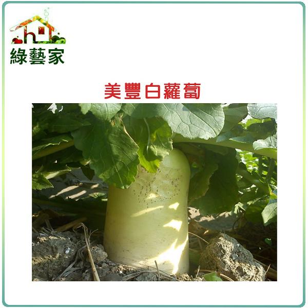 【綠藝家】大包裝C03.美豐白蘿蔔18克 (日本進口超雲大根)種子