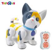 玩具反斗城 紅外線遙控貓咪