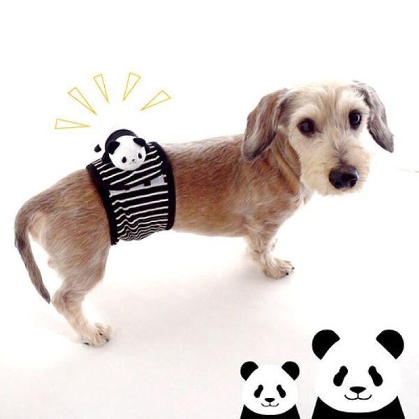 【PET PARADISE 寵物精品】NARIKIRI 可愛熊貓禮貌帶 (4S) 寵物禮貌帶