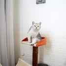 愛咪購貓爬架小型貓隧道貓跳台貓樹貓抓柱貓咪用品寵物玩具貓窩 DF玫瑰