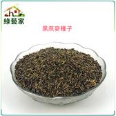 【綠藝家】大包裝J15.黑燕麥種子350克(燕麥草.綠肥)