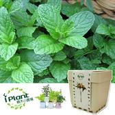 【 iPlant 積木小農場 - 薄荷 】多肉療鬱香草種子植栽盆栽開心農場【心安購物】