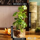 仿真花擺件植物假四葉草盆栽家居客廳桌面假花裝飾綠植盆景QM『櫻花小屋』
