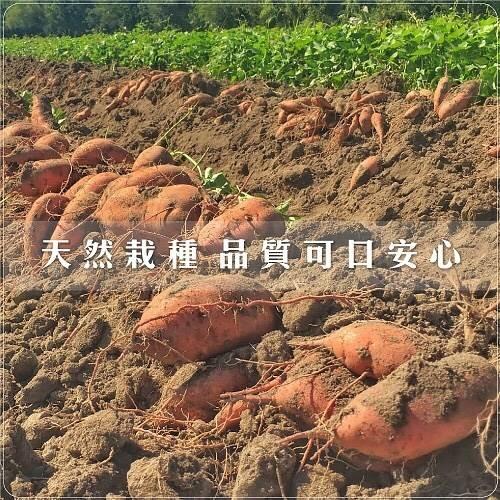 【果之蔬-全省免運】台農66號紅地瓜(10台斤±10%)