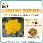 【綠藝家】大包裝H57.黃晶菊種子2.5克(約1500顆)