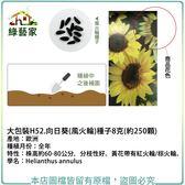 【綠藝家】大包裝H52.向日葵(風火輪)種子8克(約250顆)