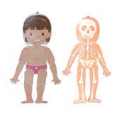 人體骨骼掛圖 (OS小舖)