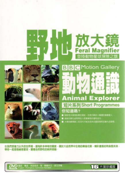 野地放大鏡 動物通識 DVD BBC動物的儀式惡作劇遷徙爭鬥脫離野性映像恐懼症巫術指南狂野世界
