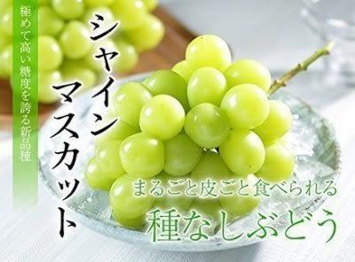 【果之蔬-全省免運】日本晴王麝香葡萄禮盒X1盒(1串/盒 每盒約600g±10%含盒重)