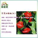 【綠藝家】大包裝G46.牙買加辣椒(紅,極辣)種子80顆