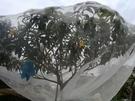 楊梅網罩水果樹專用罩防蟲網