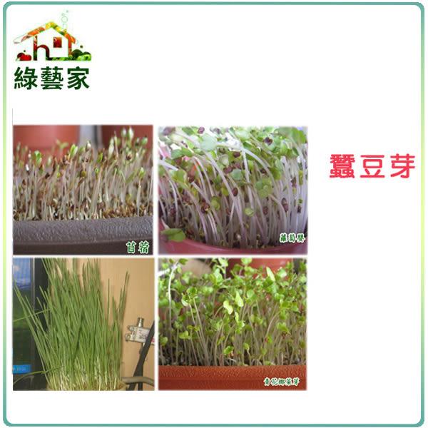 【綠藝家】大包裝蠶豆芽種子500公克(蠶豆芽菜種子)