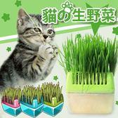 Petstyle 小麥草+貓草種植盒組合 貓飼料 貓咪 貓吊床 貓咪床 貓砂 貓跳台 貓抓板 貓砂盆