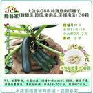 【綠藝家】大包裝G88.綠寶夏南瓜種子(...