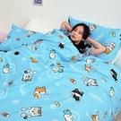 床包 / 雙人加大【逗柴貓藍】含二件枕套,磨毛多工法處理,戀家小舖台灣製 柴犬 貓