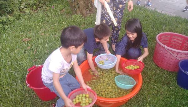 [台南]採果體驗-梅嶺福來梅園(梅子、桃子)