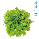水耕蔬菜-綠橡生菜150g 【 產地直送,須等7-9天】
