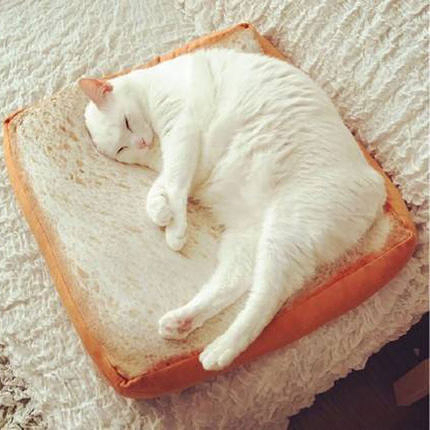 一片切片麵包坐墊子吐司寵物貓咪土司抱枕座墊nitori玩具靠墊