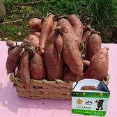 金山66號有機地瓜番薯(紅肉)5台斤/盒