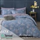 【BEST寢飾】60支天絲床包兩用被四件式 雙人5x6.2尺 英倫情人-藍 100%頂級天絲 萊賽爾 附正天絲吊牌